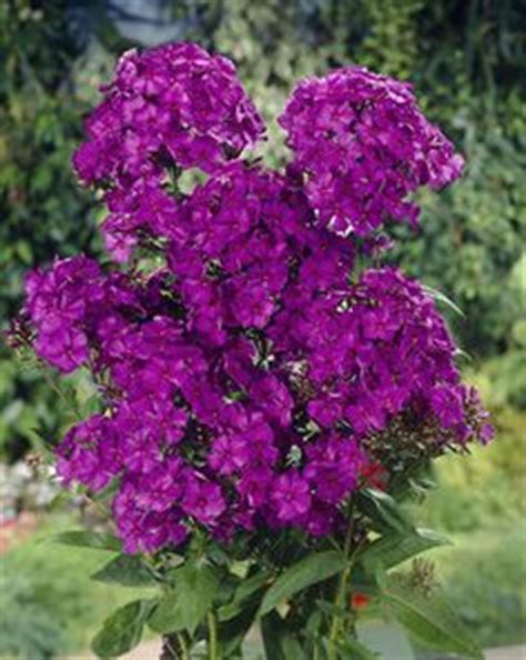 1000 images about flowers in the shade on pinterest perennials shade perennials and shades