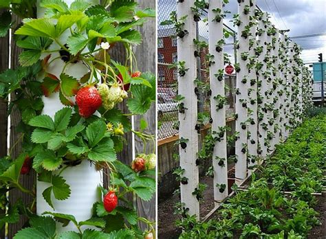 how to make vertical strawberry tube planter diy
