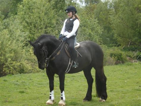 meet sox entry 101 in our ponies cobs showcase