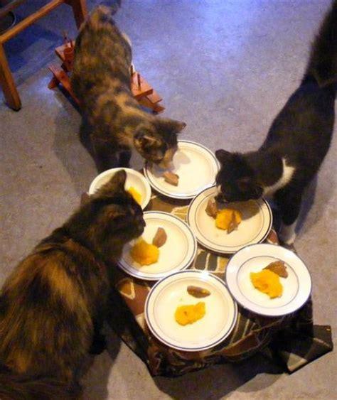 happy cat thanksgiving gallery