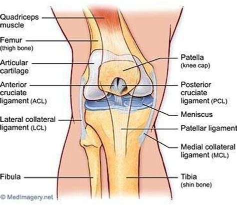 parts of knee diagram the world s catalog of ideas