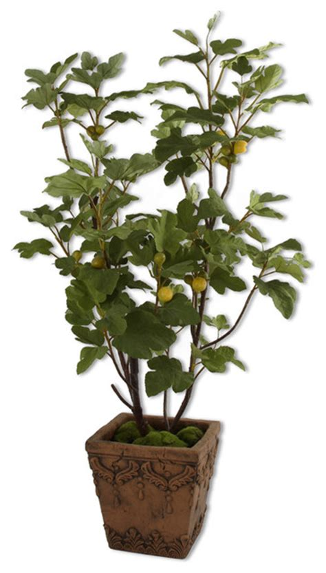 60049 potted fig tree by uttermost modern indoor