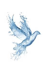 water splash bird wallpaper