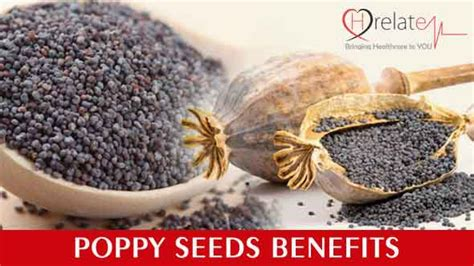 Poppy Seeds Khuskhus For And Health And Personality Grooming by Poppy Seeds Benefits Amazing Results In A Small Package