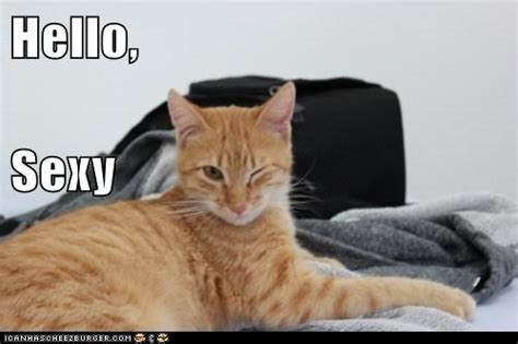 Sexy Cat Memes - i am sexy and i know it 50 cat theme photos complete