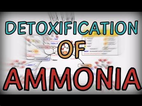 Ammonia In Human How To Detox by Detoxification Of Ammonia In The Human