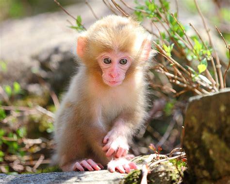 amazing animal babies 1405284285 35 amazing cute baby animal pictures