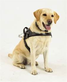 charleston puppies south guide dogs association for the blind our chosen charity for 2014