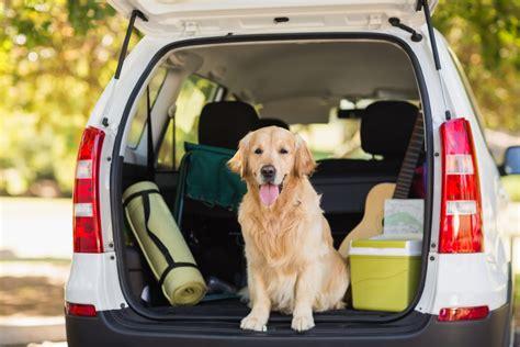Hund Im Auto Transportieren by Hund Im Auto Vorschriften Tipps Und Tricks F 252 R Das