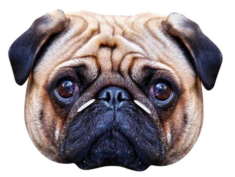 pug mask pug single card mask in stock now with free uk delivery worldwide