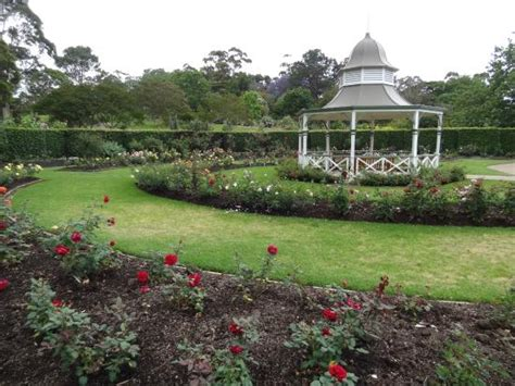 gazebo at the gardens picture of wollongong botanic