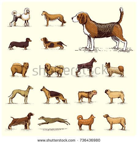 setter dog breed crossword clue shutterstock puzzlepix
