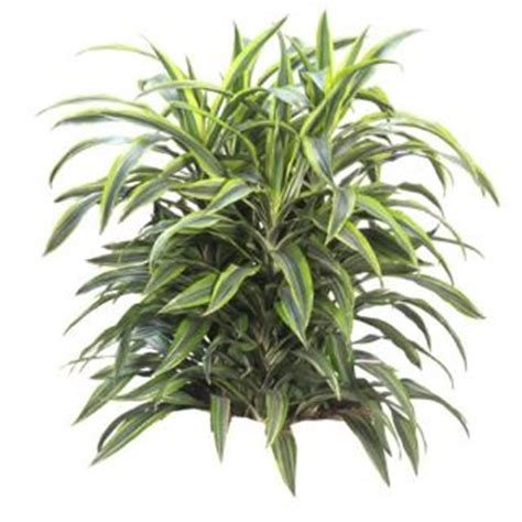 low light tropical plants indoor tropical plants low light interior tropical gardens
