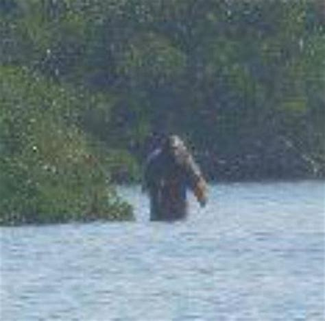 Bigfoot Search 102 Best Images About Bigfoot On Ufo Sighting