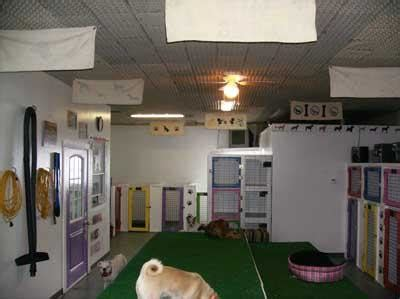 boarding houses for dogs animal house dog cat boarding medicine hat ab po box 156 lcd 1 canpages