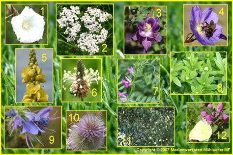 Blumen Pflanzen 1112 by Blumen Pflanzen Platycerium Bifurcatum