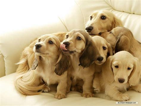 dogs animal planetdogs