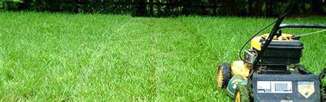 lawn care 101 keep it green heaton dainard real estate llc