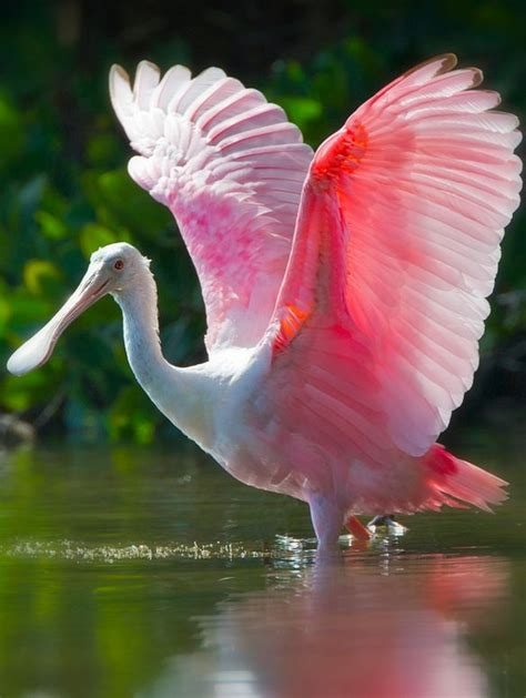 mexicanlove bird top 25 best pink bird ideas on beautiful birds pretty birds and colorful birds
