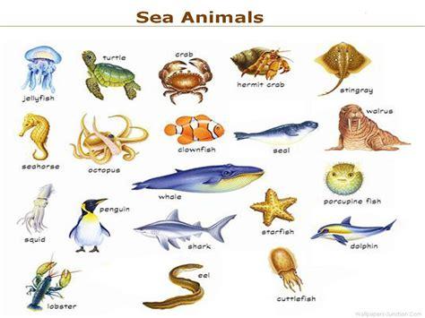 Sea Animal 2 by Sea Animals Names Cakepins Preschool Stuff