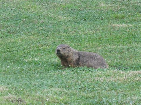 common backyard animals common backyard animals 28 images common backyard