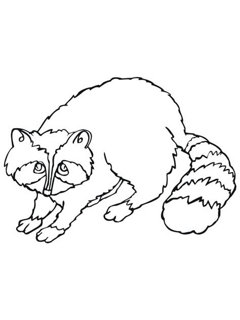 chester raccoon coloring page snap cara org