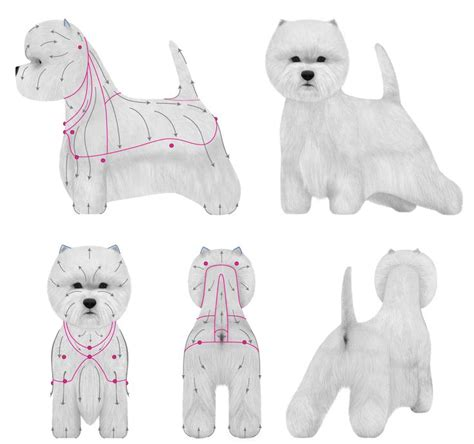 Clipping And Grooming Your Terrier 1000 ideas about havanese grooming on