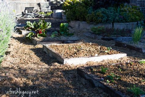 What Is The Best Mulch For A Vegetable Garden Best Mulch For Vegetable Garden