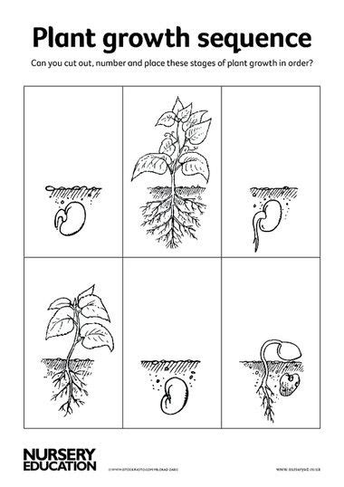 s day card preschool grows template 17 best images about 2015 vgg renaissance italy on