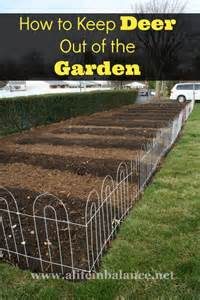 how to keep deer out of the garden home garden
