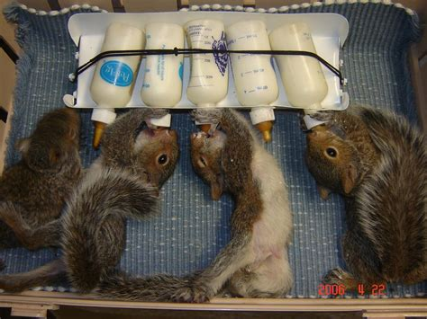 fuggin squirrel in my basement page 5