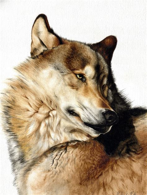 imagenes de lobos taringa lobos megapost imagenes y mas taringa