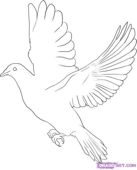white dove template how to draw a dove step by step birds animals free