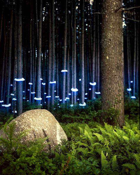 landscape light installations barry underwood 谷德设计网