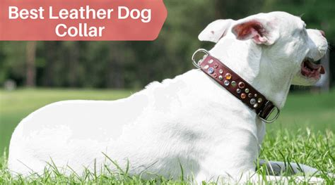 best leather collars for big breeds
