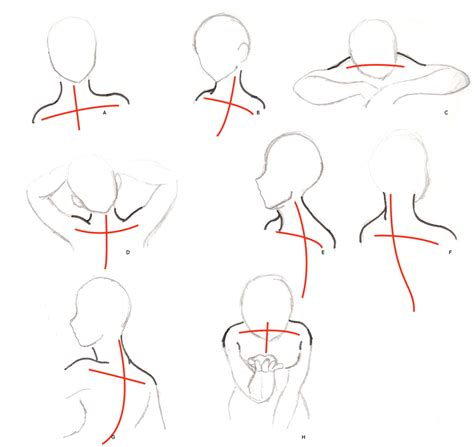 Sho N Shoulders neck and shoulders drawing www pixshark images galleries with a bite