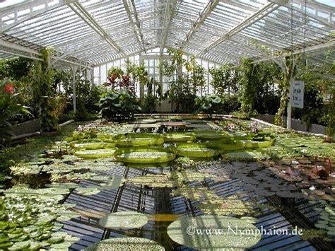 botanischer garten berlin seerosen euryale nymphaion seerosen lotos