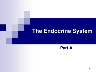 section 39 1 the endocrine system ppt 39 1 endocrine system graphic organizer powerpoint