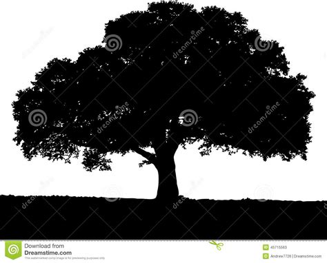 trees silhouettes stock illustration image of color 43384093 tree silhouette black white colors stock illustration image 45715563
