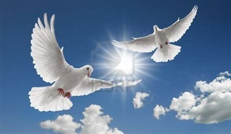 imagenes palomas blancas volando imagenes palomas volando imagui