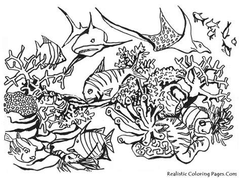 seahorse antistress coloring page black stock vector