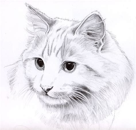 The 25  best Cat drawing ideas on Pinterest   Simple cat
