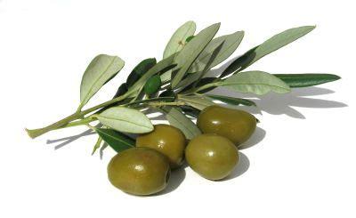 Minyak Zaitun Olio Dioliva greekfood ch griechische oliven und olivenpaste