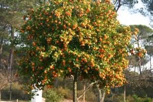 Small Backyard Garden Garden Project Spanish Dream In Bonares Huelva