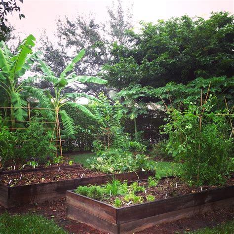 edible gardens florida gardening edible gardening in south florida