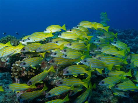 best dive spots in the world 14 best scuba diving destinations in the world im