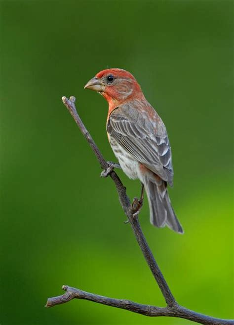 17 best images about texas hill country birds on pinterest