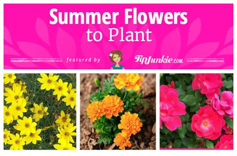 16 best flowers to plant for summer tip junkie