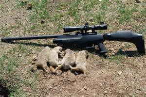 Hunting ground squirrels with air rifles