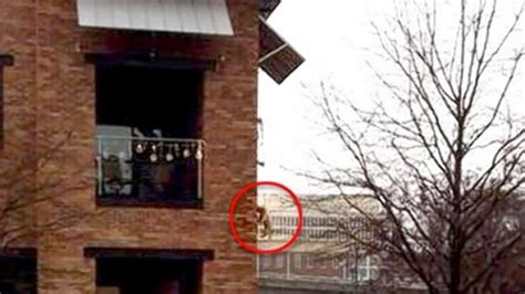 Man Dangles Dog Off Balcony To Use Bathroom Ny Daily News